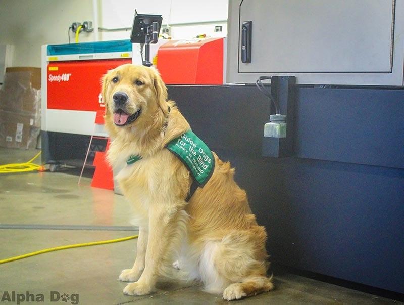 about dog : alpha dog ada signs